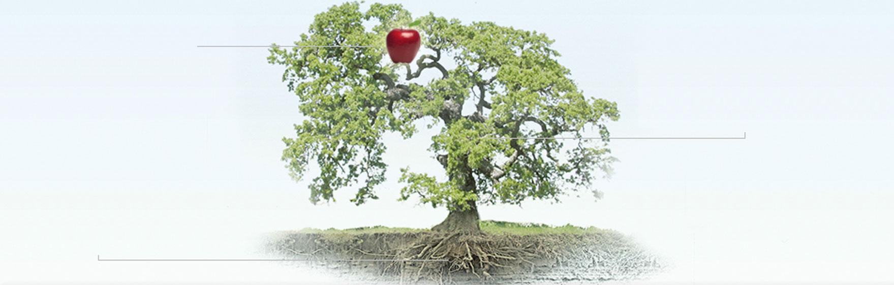 boom KamphuisGroep